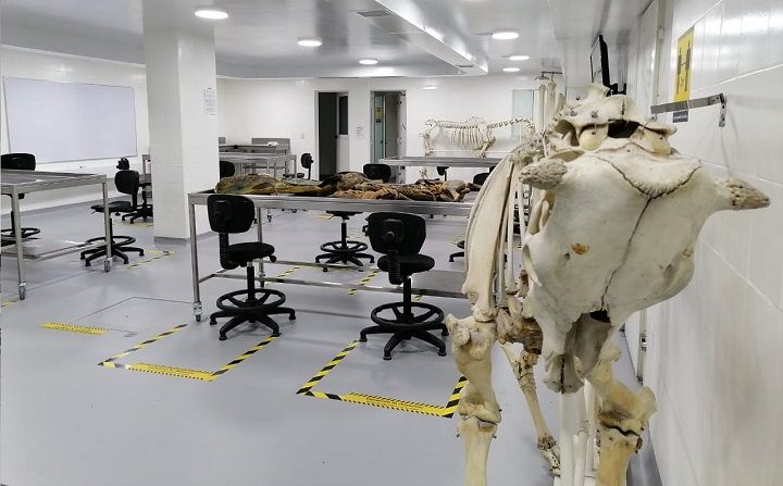 Inserto 2 nota cinco nuevos espacios de práctica de la Facultad MVZ sede Bogotá